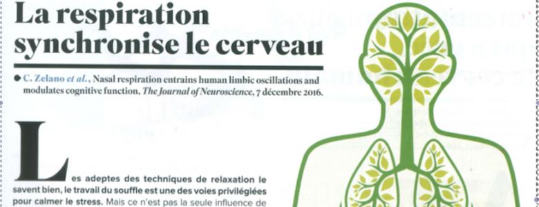 La respiration et le Cerveau
